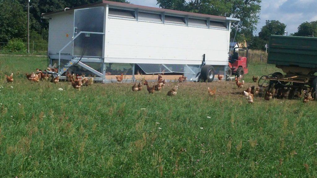 Eier von glücklichen Hühnern 02