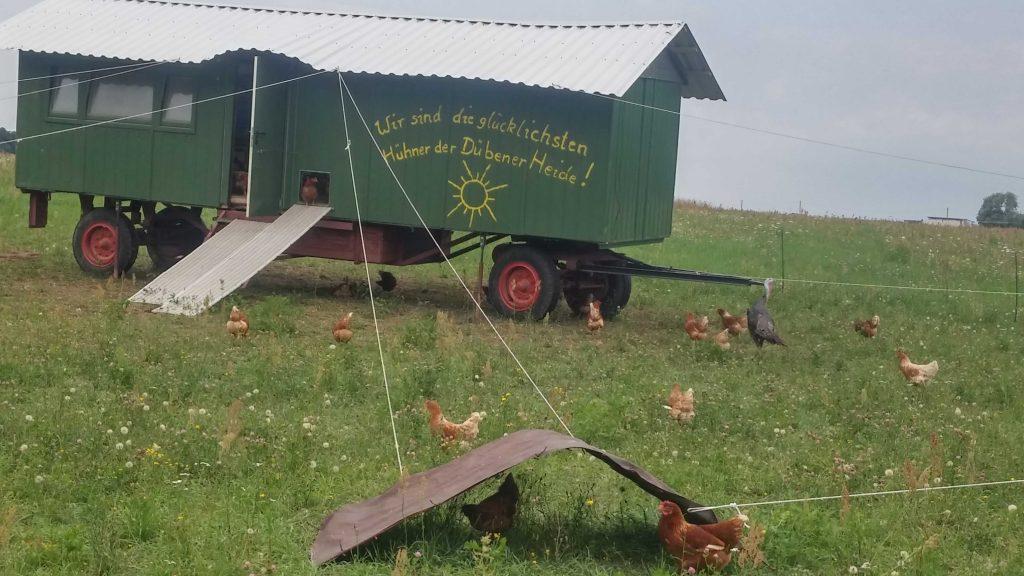 Eier von glücklichen Hühnern 03
