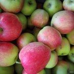 biofrucht-senst-aepfel-1