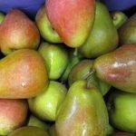 biofrucht-senst-birnen